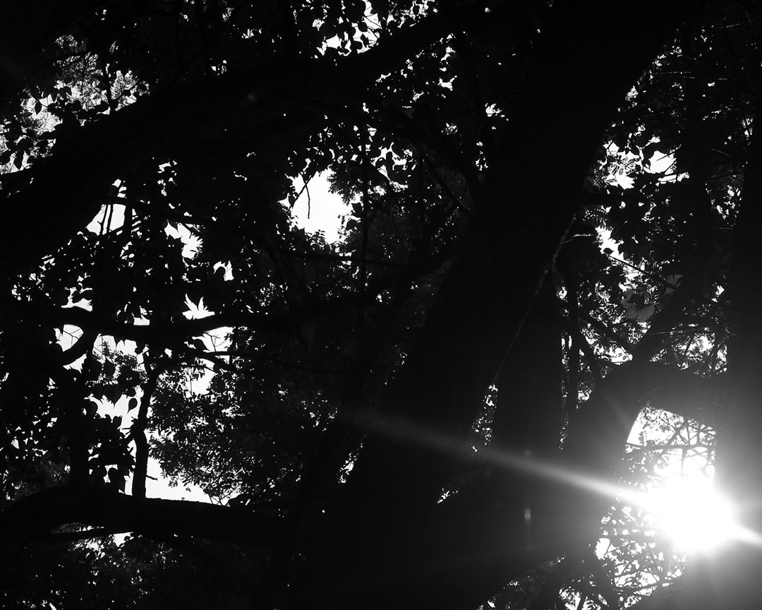 Tree branches with sun coming through, Photography by Benjamin Haile